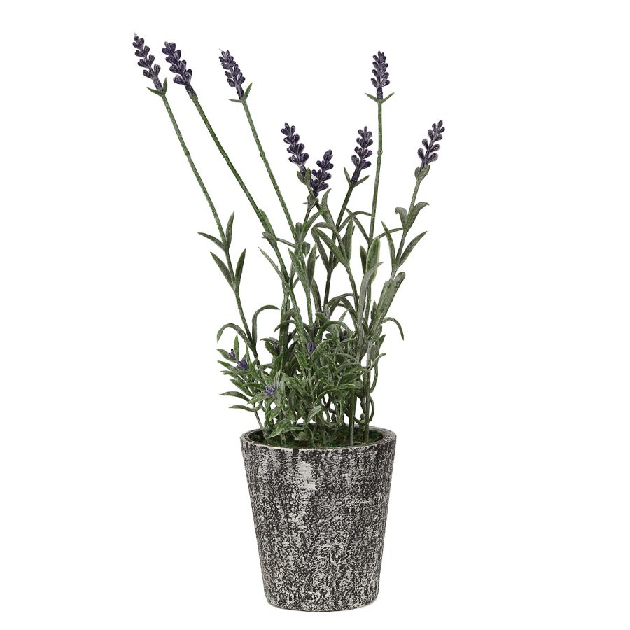 Lavender 32cm